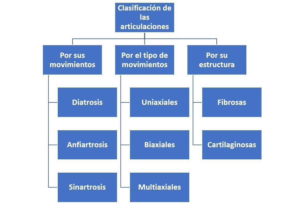 Clasificación de las articulaciones - ¿Cómo se clasifican?