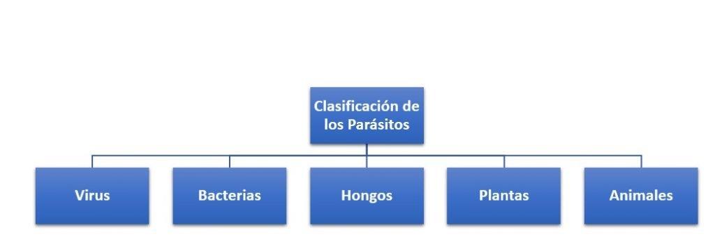 Clasificación de los Parásitos