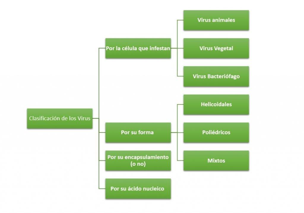 Clasificación de los Virus