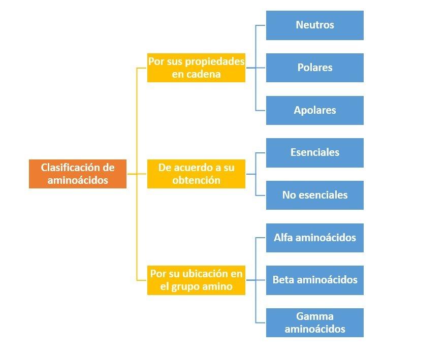 Clasificaci n de amino cidos c mo se clasifican for Como se cocinan los percebes