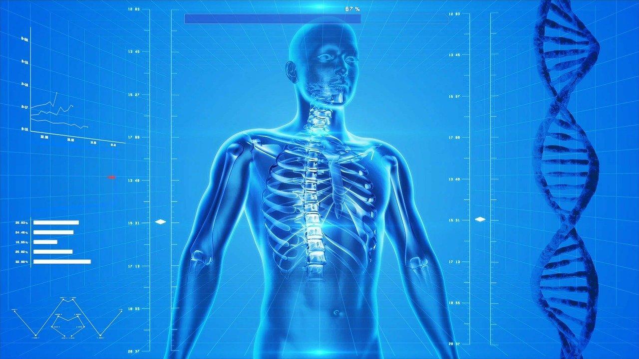 Tipos De Anatomía Cómo Se Clasifican