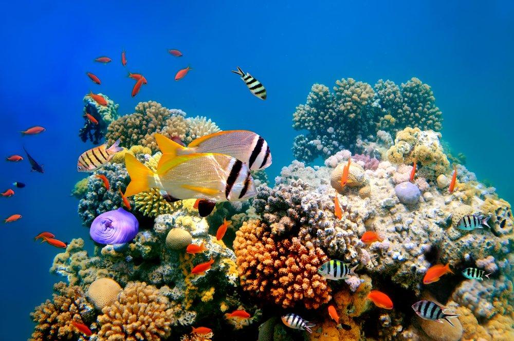 arrecifes de corales ejemplos de ecosistemas