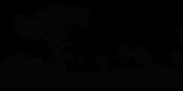 selva humeda tropical Ejemplos De Ecosistema Terrestre