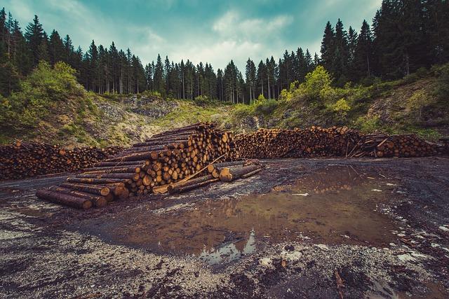 deforestacion Ejemplos de Problemas Ambientales